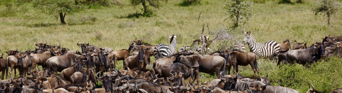 La Tanzanie, safari et coquillages à la carte