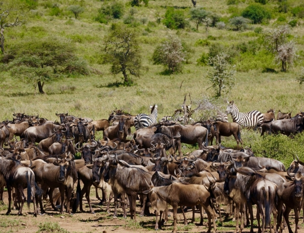 La Tanzanie, safari et coquillages à la carte